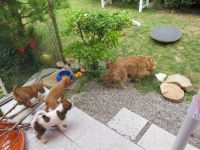 Hundebesuch, Curry passt auf (1)